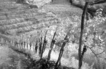 grandi-vini-piccole-cantine_web