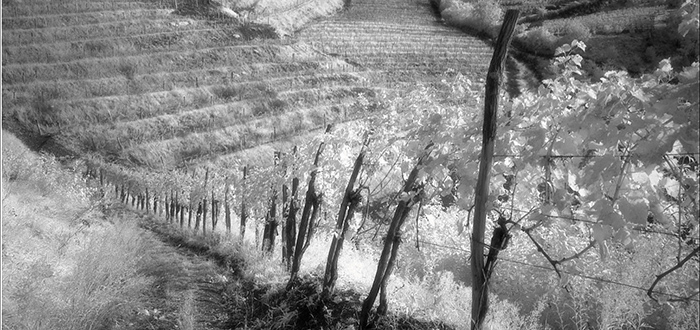 Grandi vini di piccole cantine for Piccole planimetrie con cantine